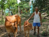 Phú Giáo:  Thực hiện 7 mô hình chuyển giao khoa học kỹ thuật cho nông dân