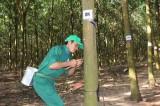 Hội thi thợ giỏi thu hoạch mủ ngành cao su năm 2014: Cơ hội quảng bá ngành cao su Việt Nam