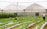 Bộ trưởng Bộ NN&PTNT Cao Đức Phát: Bình Dương là hình mẫu phát triển nông nghiệp thời đại mới