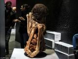 Peru: Xác ướp phụ nữ 1.000 năm tuổi trong tư thế ngồi co