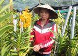 Đào tạo nghề cho lao động nông thôn: Hiệu quả thiết thực