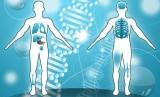20 điều tuyệt vời về cơ thể người