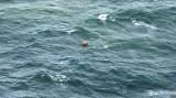 Không có sự cố tràn dầu trên vùng biển tìm kiếm máy bay QZ8501