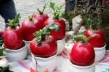 Sốt củ cải đỏ rước 'của cải' vào nhà ngày tết