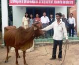 Dự án bò sinh sản cho hộ người khuyết tật xã Tân Hiệp, Phú Giáo:  Thí điểm một chương trình đậm tính nhân văn