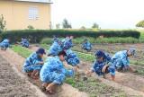 Tăng gia sản xuất trên huyện đảo Trường Sa