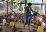Nguồn cung thực phẩm cho thị trường tết