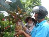 Đẩy mạnh phát triển nông nghiệp ứng dụng công nghệ cao