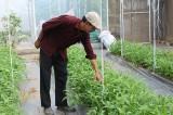 Nông nghiệp công nghệ cao phát triển mạnh