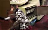 Khỉ làm nhân viên phục vụ nhà hàng tại Nhật Bản