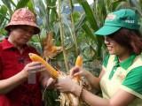 Cuối năm 2015, Việt Nam thương mại hóa cây trồng biến đổi gen