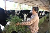 Nâng cao hiệu quả mô hình kinh tế trang trại