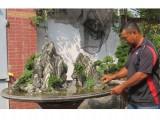 Sự hợp duyên kỳ lạ giữa thể thao và nghệ thuật bonsai