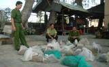 Phát hiện 14 cá thể trăn gấm bị nuôi nhốt trái phép