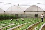 Toàn tỉnh hình thành 4 khu nông nghiệp kỹ thuật cao