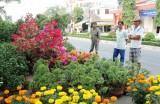 Nhộn nhịp chợ hoa xuân