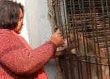Cặp vợ chồng để lại gia tài cho khỉ