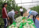 Unifarm tăng diện tích trái cây xuất khẩu trong năm 2015