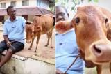 Con bò lùn nhất thế giới