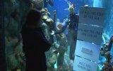 Cầu hôn từ trong bể cá mập