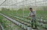 Đẩy mạnh ứng dụng, chuyển giao tiến bộ kỹ thuật vào sản xuất nông nghiệp