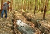 Trại nuôi vịt xả thải ra môi trường