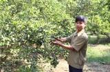 Phú Giáo: Những nhà nông trẻ làm kinh tế giỏi