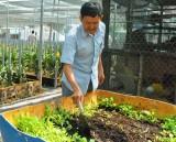 Phát triển mô hình vườn rau an toàn tại nhà
