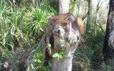 Australia: Phạt 20.000 USD vì chặt cây tại khu vực linh thiêng