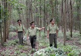 Kon Tum sử dụng hơn 123 tỷ đồng chi trả dịch vụ môi trường rừng