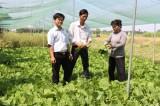 Tăng cường hỗ trợ nông dân phát triển kinh tế
