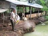 Cựu chiến binh huyện Phú Giáo: Tích cực giúp nhau làm kinh tế