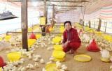 Làm giàu từ mô hình chăn nuôi kết hợp