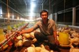 Kinh tế trang trại: Nhiều kỳ tích