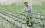 Phát triển nền nông nghiệp theo hướng hiện đại