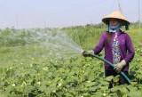 Bảo đảm đủ nước tưới cho sản xuất nông nghiệp