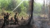 Hỏa hoạn thiêu rụi 12ha rừng tràm U Minh Hạ tại tỉnh Cà Mau