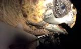 Rùa được cấy hàm 3D