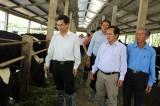 Ngành Nông nghiệp - Phát triển nông thôn Bình Dương: Đóng góp quan trọng cho quá trình phát triển của tỉnh