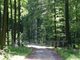 """Bảo vệ rừng: """"Việc quan trong nên giao cho quân đội quản lý"""""""