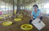 Xã Lai Uyên, huyện Bàu Bàng: Phát triển mạnh kinh tế trang trại