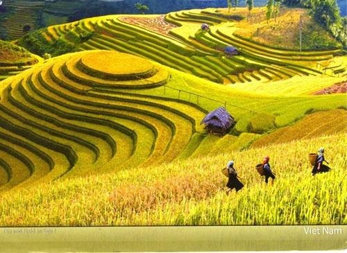 附图:越南穆庚寨梯田风景.