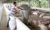 Xã Lai Uyên, huyện Bàu Bàng: Phát triển kinh tế trang trại góp phần xây dựng nông thôn mới