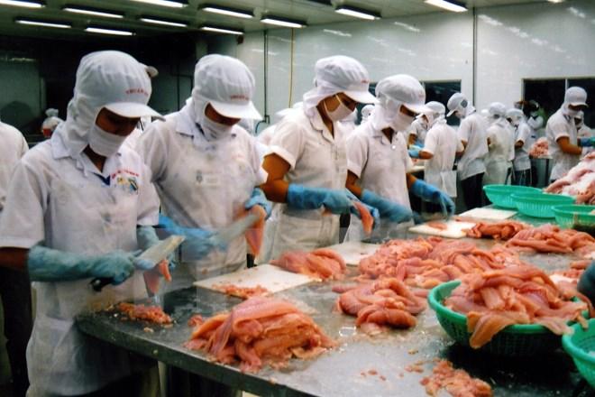 Chế biến cá tra philê xuất khẩu tại Công ty TNHH Thuận An