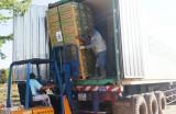 Unifarm xuất khẩu chuối già hương sang Nhật Bản