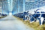 Doanh nghiệp trang trại và hội nhập