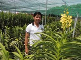 Nguyễn Hiền Nhơn: Nhà nông trẻ dám nghĩ dám làm