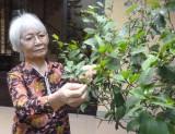 Chuyện ngôi nhà số 48 Hàng Ngang, Hà Nội...