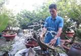 Độc đáo điêu khắc trên cây cảnh bonsai