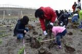 Nhật Bản thúc đẩy dự án trồng rừng ngăn chặn biển xâm thực